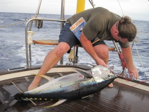 yellow fin tuna caught on sailboat, fishing from a sailboat